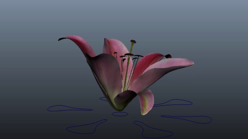 3D animation of an opening lily