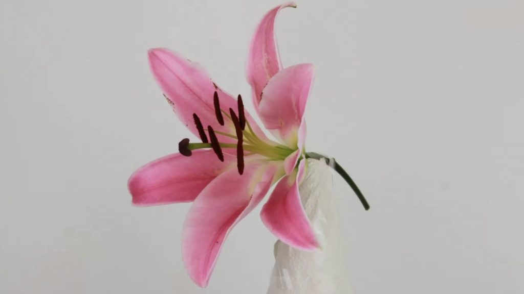 Pink lily taped to a bottle for photogrammetry 3D scan